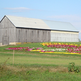 Davidsonville, Maryland Farm with beautiful flowers